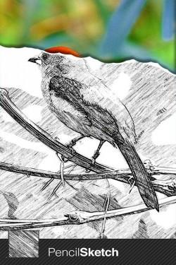 Imagen de Sketch Guru