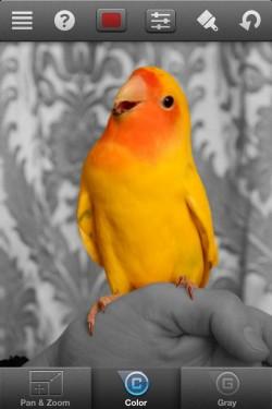 Imagen de Color Splash