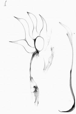Imagen de Hand Drawing 1